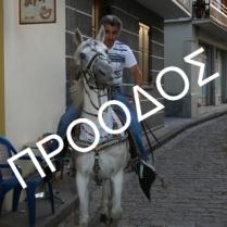 img_0201